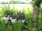 Hühnertreff