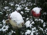 Kuh und Schwein im Schnee