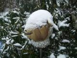 Schafskopf im Schnee