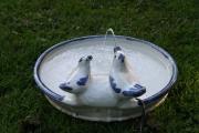 Vogeltränke mit Duschbad