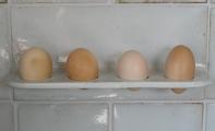 Küchenfliese Eierhalter weiß